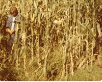 Tony Houston checks out corn