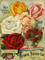 Iowa Seed Company Catalog 1906