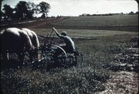 Farmer On Horse Drawn Plow