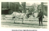 Students in horse costume for Mecca Day, The University of Iowa, 1923