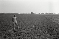 Shirtless Man in Hat and Overalls Stands in Clover Field