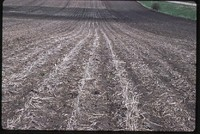 Ridge-tilled Field.