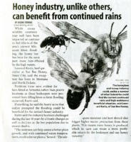 Honey industry, unlike others,<br /> can benefit from continued rains