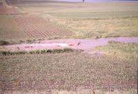 Water running through cropland