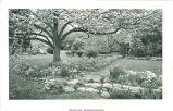 Rosenfield garden, Des Moines, Iowa, May 1954