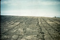 Rill erosion in Cherokee County, Iowa.