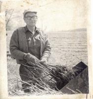 Walnut Seedlings, 1978