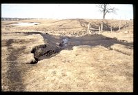 Erosion damage in a livestock pasture.