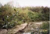 1999 - Site where feeder creek enters the Flint River
