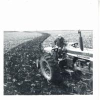 Larry N. strip crop, 1969