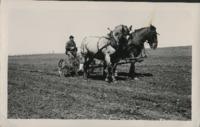 Horse drawn cultivator.