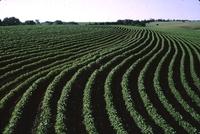 Contour crops.