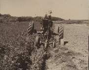 Unidentified people working in the field with a tractor