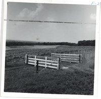 Alfred Hoffman farm