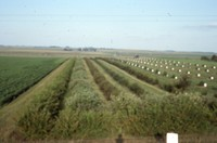 Windbreak on the farm of Don and Phyllis Conley.