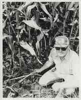 Man with hat and sunglasses kneels in cornfield