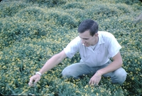 Tom Kaldenberg inspects a trefoil pasture.