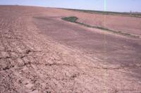 Terraced field, 1986