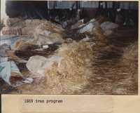 Tree Program - 1989.