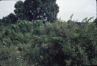 Carl Anderson pasture