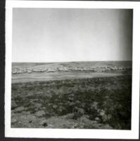 Livestock Grazing in a Field