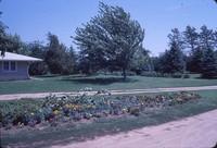 Windbreak on Jerry Peterson's farm.
