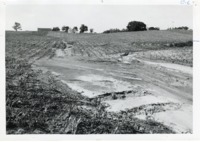Silt deposit on George Beck Sr. cropland, 1968