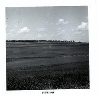Gerald Hobbs strip crop, 1968