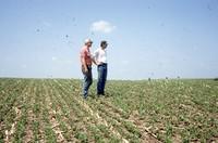 Quad District Award winners Steve and Tim Lundsgaard show off their no-till, drilled bean field.