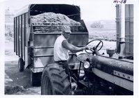 Wayne Meyer with chopped forage, 1967