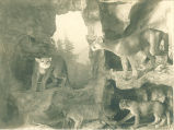 Natural History Museum exhibit with stuffed wild cats, The University of Iowa, 1930s