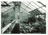 Greenhouse on Chemistry Building roof, the University of Iowa, 1956