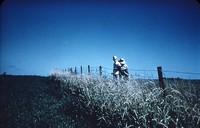 Grassed fence line.