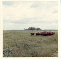 Gerlach pasture in November, 1967