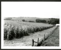 Field Headland