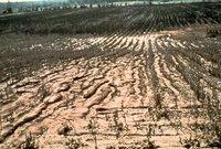 Sandy field, 1979