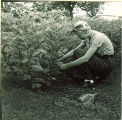 Pharmacy student tending plants outside, The University of Iowa, 1940s