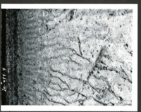 Soil Damage on Erwin W. Cole Farm