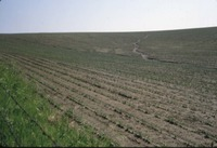 Erosion in bean field