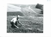 Lester Roeder trefoil pasture, 1965