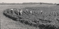 Group of Men Examine Lewis Mott's Farm.