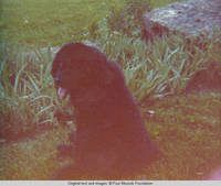 Sadie, the dog near the rock garden