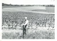 Contoured corn planted by Jim Sommers, 1967