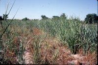 Grassy field, 1983