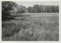 Grassed waterway in Delaware County, Iowa.