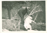 Expedition member Russell Hendee with mountain goat in Washington state, The University of Iowa, 1920