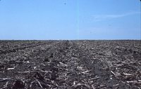 Ridge-tilled Field.