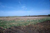 Wetland Area on Henry Hanby's Farm.