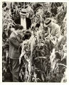 Henry A. Wallace, 'Spike' Evans, and Jim Russell in cornfield, United States, 1933