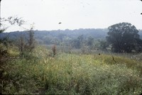 Wildlife area on the farm of Bud and Dorothy Stiles.
